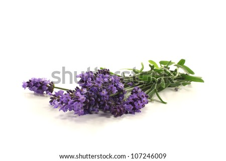fresh lavender with purple flowers and leaves on a bright background