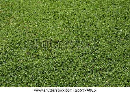 Fresh lawn in a sunny day. Green and natural background - stock photo