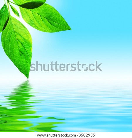 fresh leaf, blue sky and shine water surface (blank space for text) - stock photo