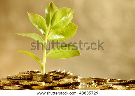 fresh leaf growing over gold hill made out of coins - stock photo