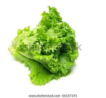 Fresh Leaf lettuce isolated on white with natural shadow. - stock photo