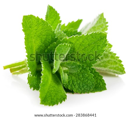 Fresh leaf mint. Isolated on white background - stock photo