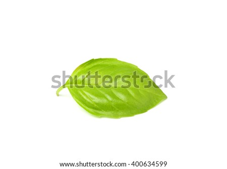 Fresh leaf of Basil close-up.Isolated on a white background. - stock photo