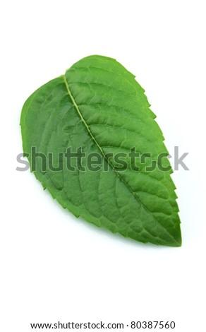 Fresh leaf of mint - stock photo