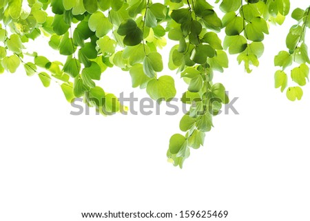 Fresh leaf on white background