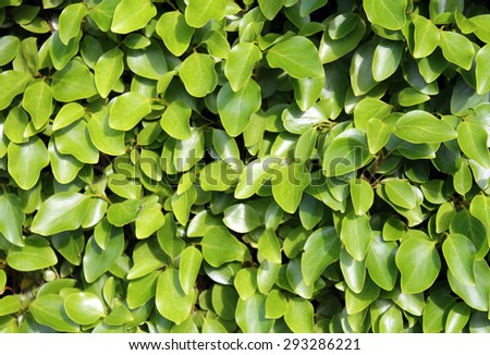 Fresh leafy green background in summer. - stock photo