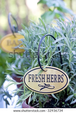 fresh leafy herbs planted in the pot - stock photo