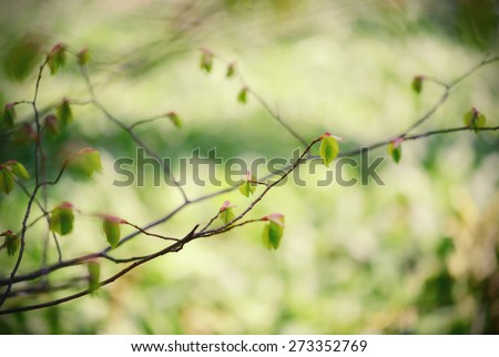 fresh leaves and buds on beech tree twig. cross processed. - stock photo