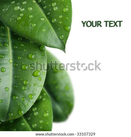 Fresh Leaves Border - stock photo