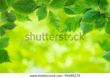 Fresh leaves in a forest