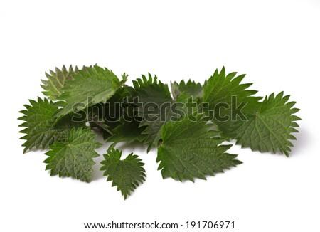 fresh leaves nettle close up macro shot isolated on white background  - stock photo