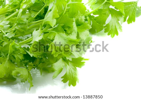 Fresh leaves of a celery - stock photo