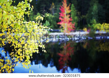 Fresh leaves of autumn sun. An image of a birch leaves by the lake and an aspen tree glowing red in the background. Still water makes nice reflections. Image has a vintage effect applied. - stock photo