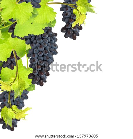 Fresh leaves of grape isolated on white background. Floral background.