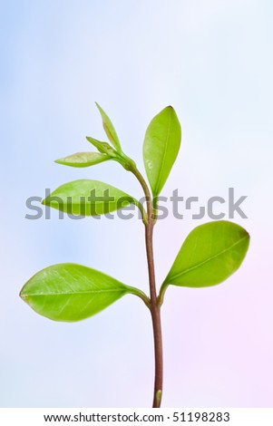 Fresh leaves on a plant branch