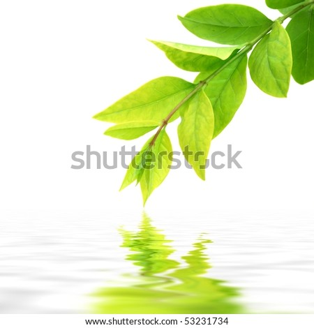 Fresh leaves reflecting in the water - stock photo