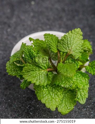 Fresh lemon balm herb .(Melissa officinalis) - stock photo