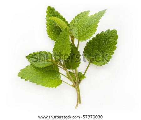 Fresh lemon balm (melissa) isolated on white background - stock photo