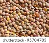 fresh lentils texture background - stock photo