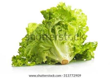 Fresh lettuce close up on the white - stock photo