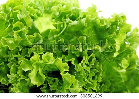 Fresh lettuce, closeup - stock photo