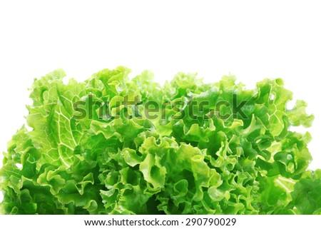 Fresh lettuce isolated on white - stock photo