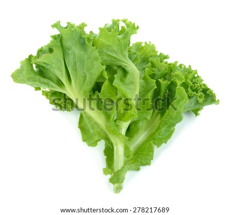 Fresh lettuce isolated on white background. - stock photo