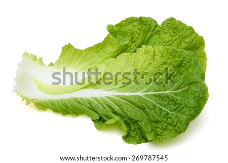 fresh lettuce leaf on white background  - stock photo