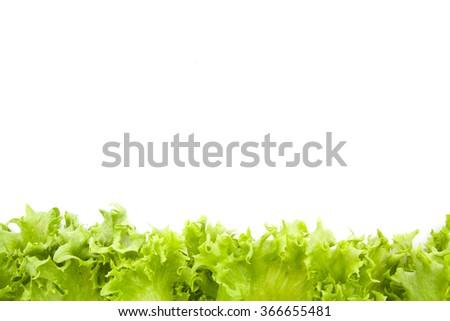 fresh lettuce leaves close up isolated on white background - stock photo