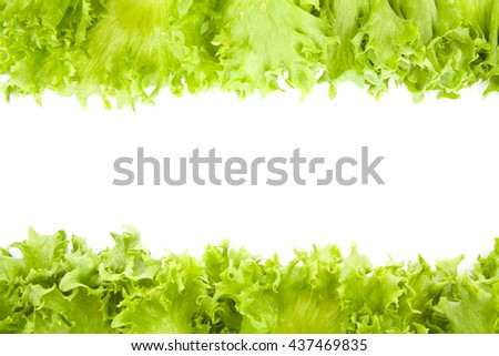 fresh lettuce leaves close up isolated on white background