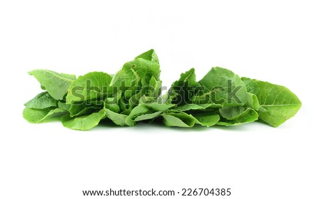 fresh lettuce leaves isolated on white