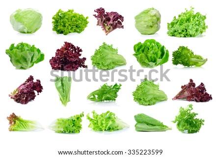 fresh  lettuce leaves isolated on white - stock photo