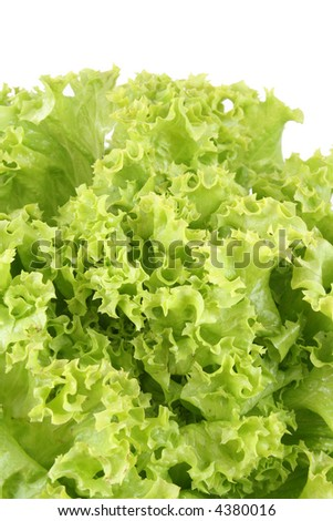 fresh lettuce - lollo bindo - isolated on white
