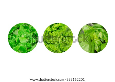 fresh lettuce, mint, basil leaves isolated on white in a circle - stock photo
