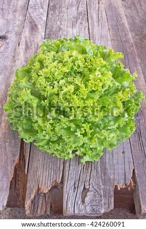 Fresh lettuce on wooden background - stock photo