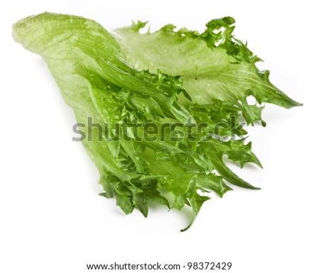 fresh lettuce salad leaf isolated on white background - stock photo