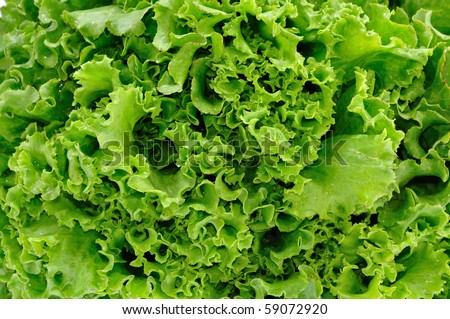 fresh lettuce texture - stock photo
