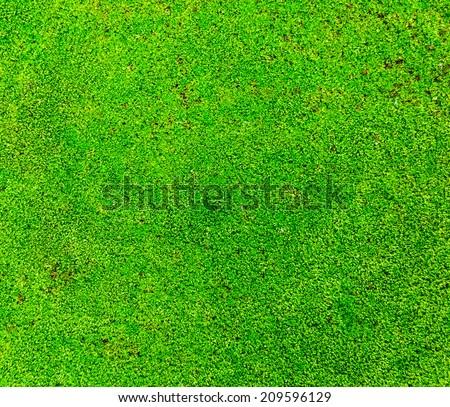 Fresh lichen field on the ground of rain forest. - stock photo