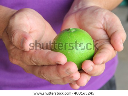 Fresh lime in Thailand no.2 - stock photo