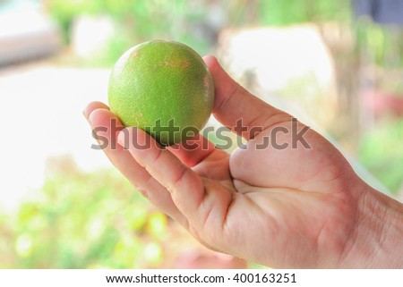 Fresh lime in Thailand no.5 - stock photo