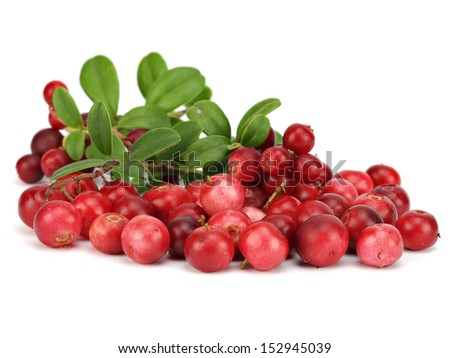 Fresh lingonberries with leaves on a white background