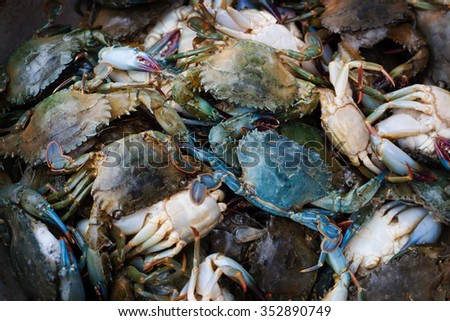 Fresh live Blue Crab. Organic background.