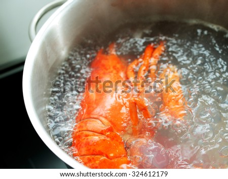 Fresh lobster boiling in hot water on set-top of stove - stock photo