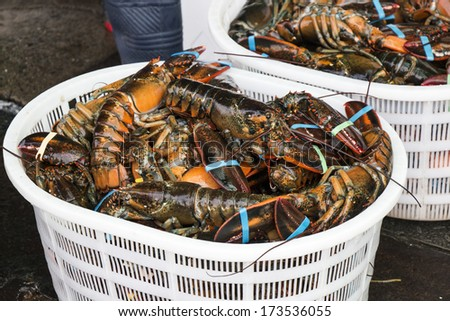 Fresh Lobster in Seafood Market - stock photo