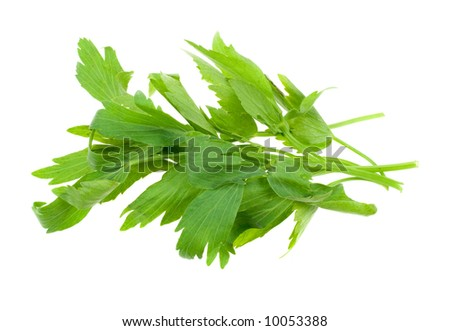 fresh lovage herb isolated on a white background
