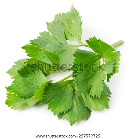 Fresh lovage twig isolated on white background. Culinary aromatic herbs.  - stock photo