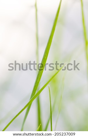 Fresh lush green background. Grass against sunbeam. Low aperture shot - stock photo