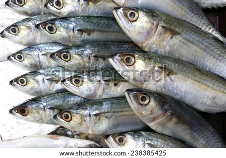 Fresh mackerel fish - stock photo