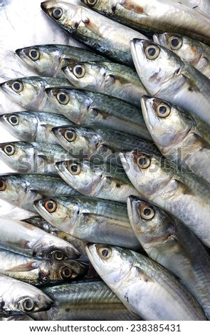 Fresh mackerel fish - stock photo