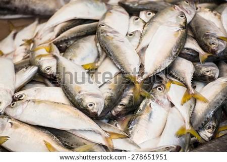 Fresh mackerel fish in market. - stock photo